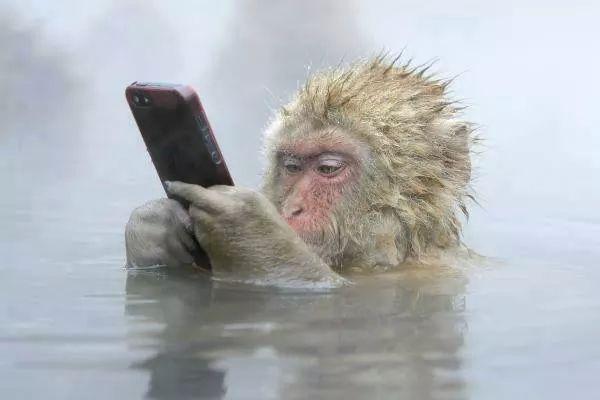 تقلید؛ بارزترین ویژگی یک میمون!