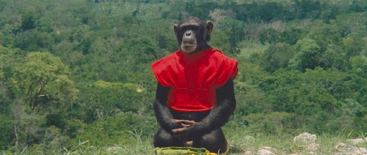 چرا میمونها هنوز وجود دارند و تبدیل به انسان نشدند؟