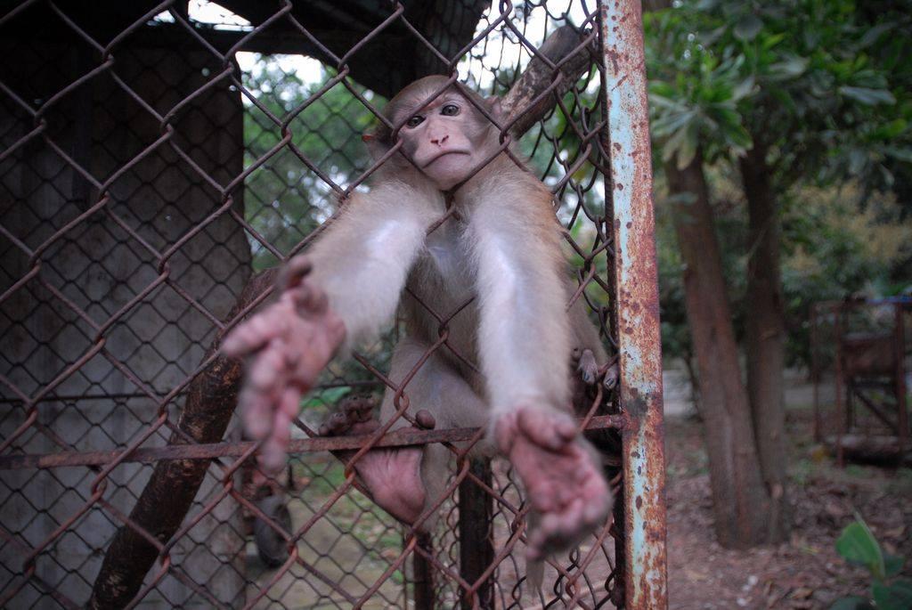 همگی با هم میمون بفروشیم!