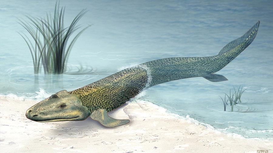تقصیرِ ماهیهاست که ما سکسکه میکنیم!