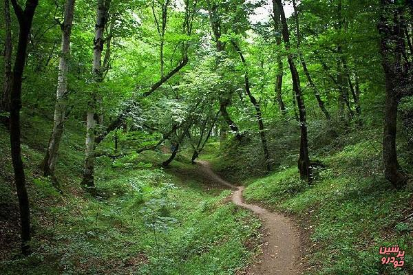 جنگلهای شمال
