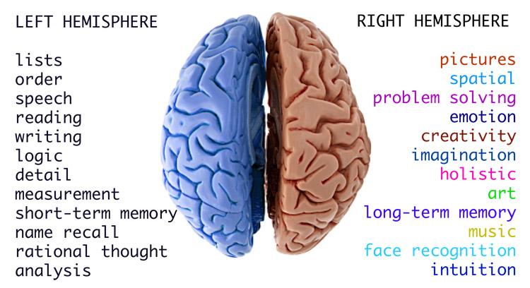 بنابه عملکرد مغز، حافظههای کوتاه مدت و بلند مدت در دو سوی مغز قرار دارند!