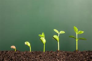 ذهنیت رشد یا ذهنیت ثابت: مساله این است!