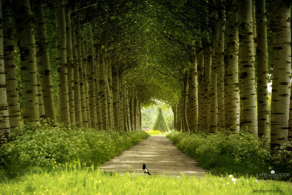 راه پیش رو (عکسی از لارس فون دگوق)