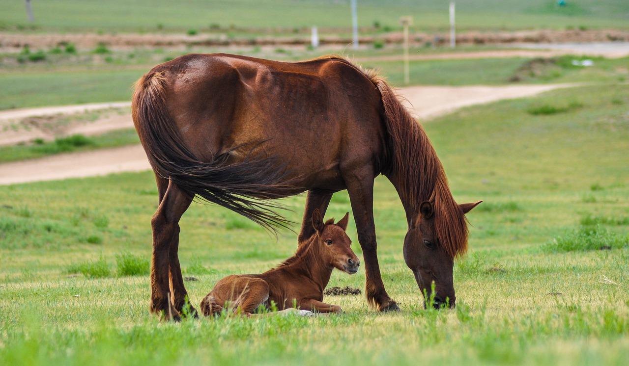 برخلاف نوزاد انسان، کره اسب از همان روزهای نخستین قادر به ادامه حیات است