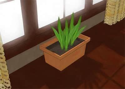 مکان ثابت گلدان
