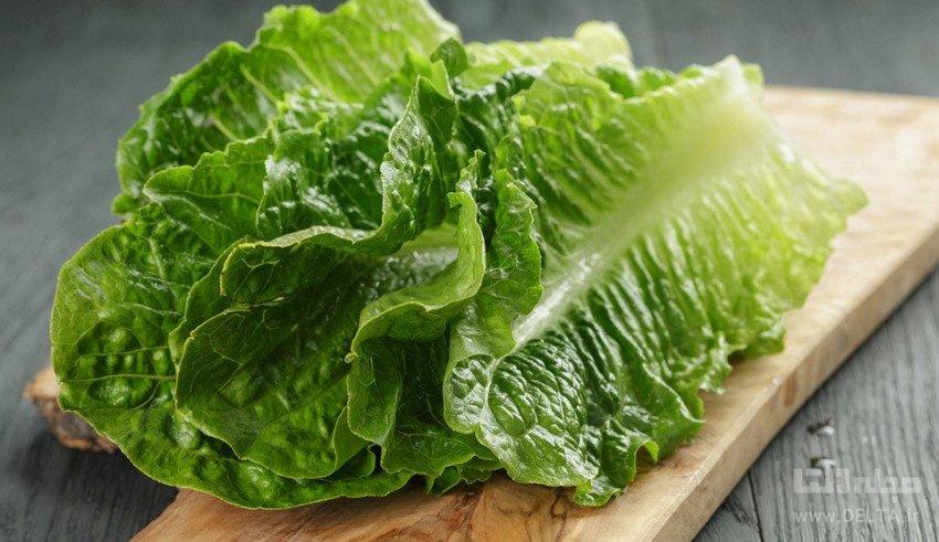 کاهو ؛ شاه سبزی خوشمزه سالاد