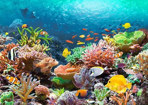 سفر هیجان انگیز به زیر دریا
