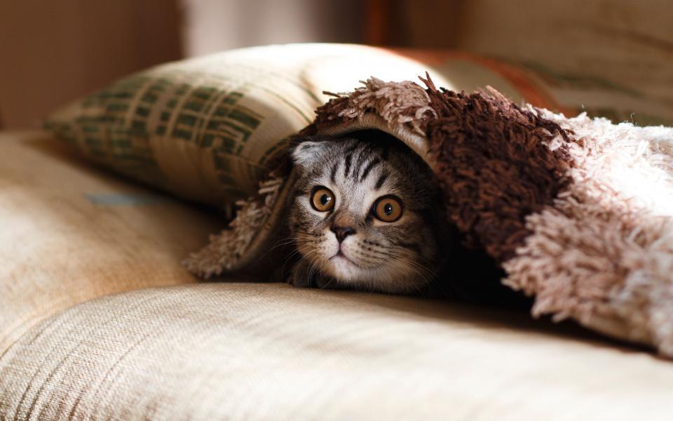 گربه شرودینگر