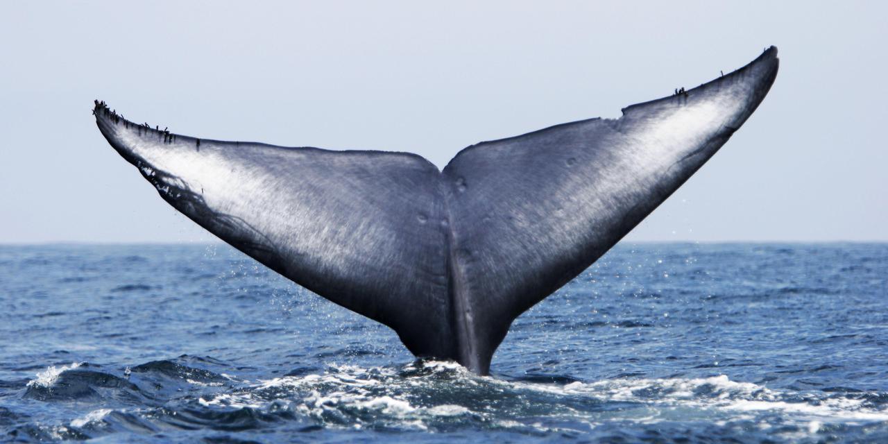 تاثیر رفتار نهنگها بر روی بازار بیتکوین و آلتکوینها