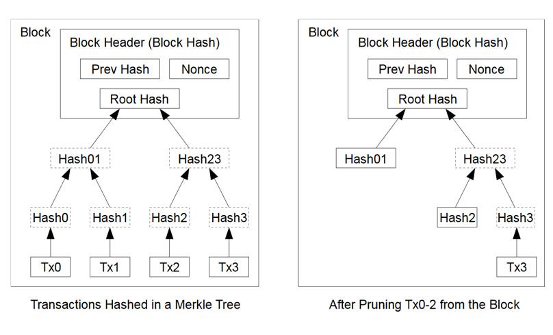 تصویری از درخت مرکل در زنجیرهبلوک بیتکوین
