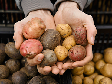 اینکه ما یک نوع سیبزمینی پرورش دهیم عالی است،اما زمانی که شرایط تغییر نکند. اکنون ما نیاز به تغییر روش خود هستیم.