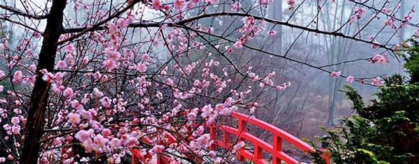 ツ  این شکوفه های زیبا برای شماست، برش دارید و گرنه اینجا بیات میشه