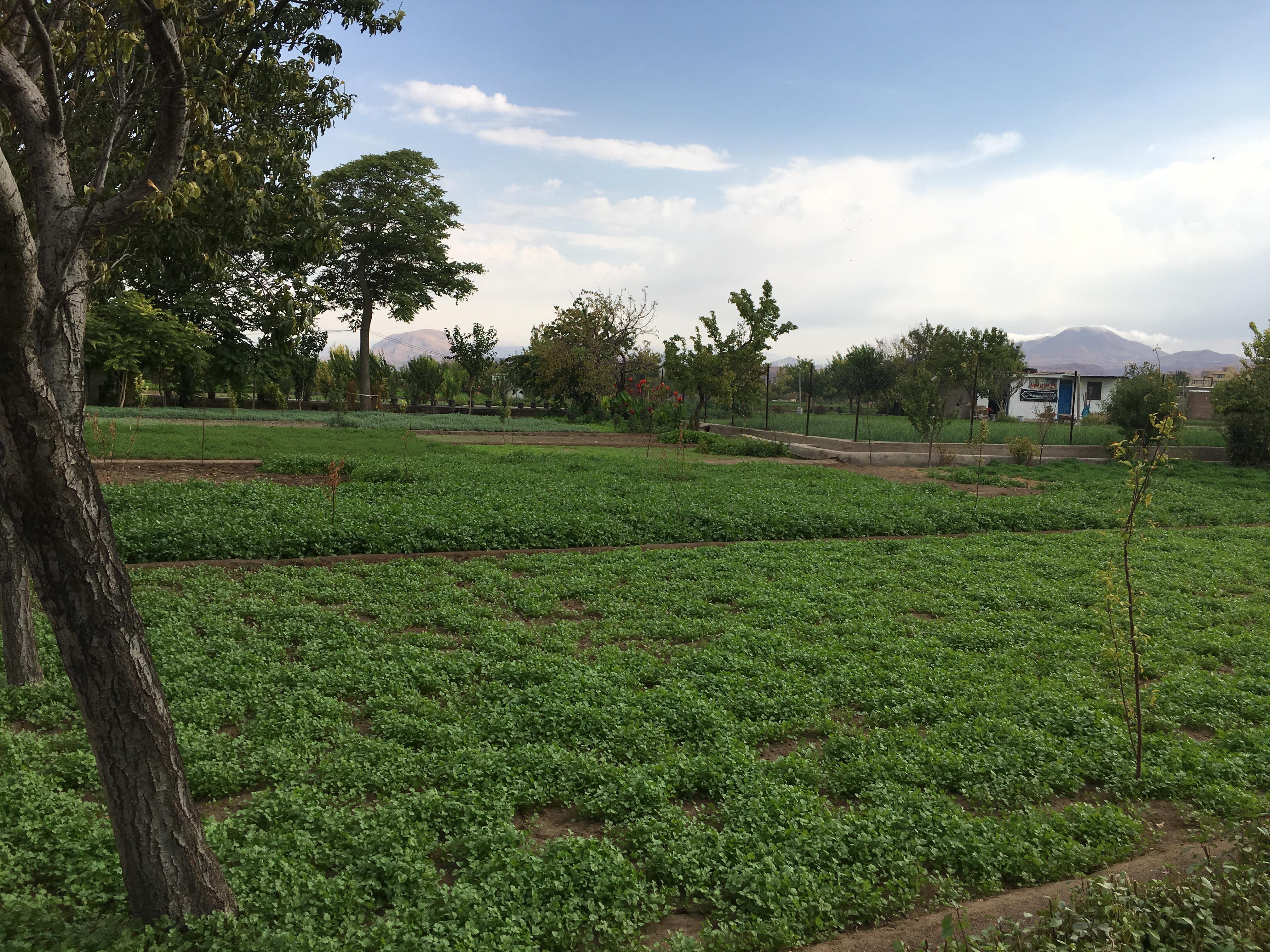 باغ سبزی احد آقا :))