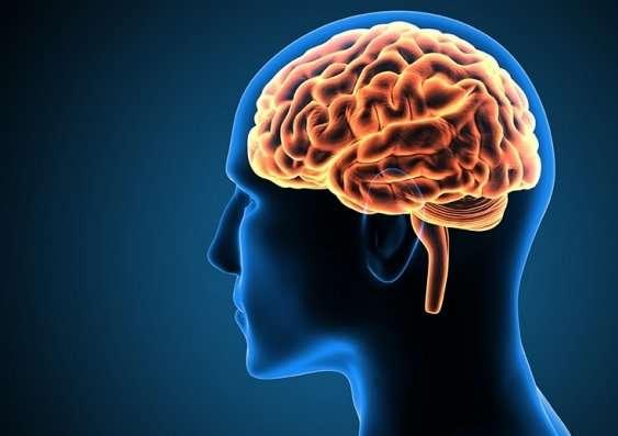 حافظه کوتاه مدت و بلند مدت چیست؟ یکبار برای همیشه