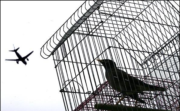پرنده در قفس میشنود