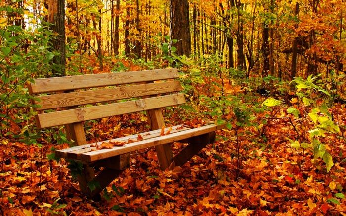در آغاز پاییز چه کنیم؟