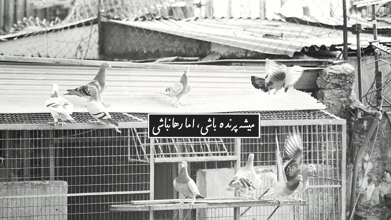 مثل یک پرنده روی بوم، فریلنسر درظاهر آزاد است، اما قید و بندهایی نامرئی او را محدود میکنند