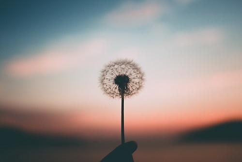 یافتن معنا از دل بی معنایی
