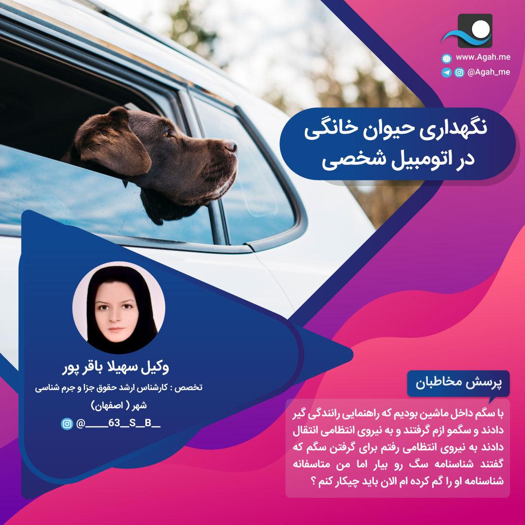 نگهداری حیوان خانگی در اتومبیل شخصی