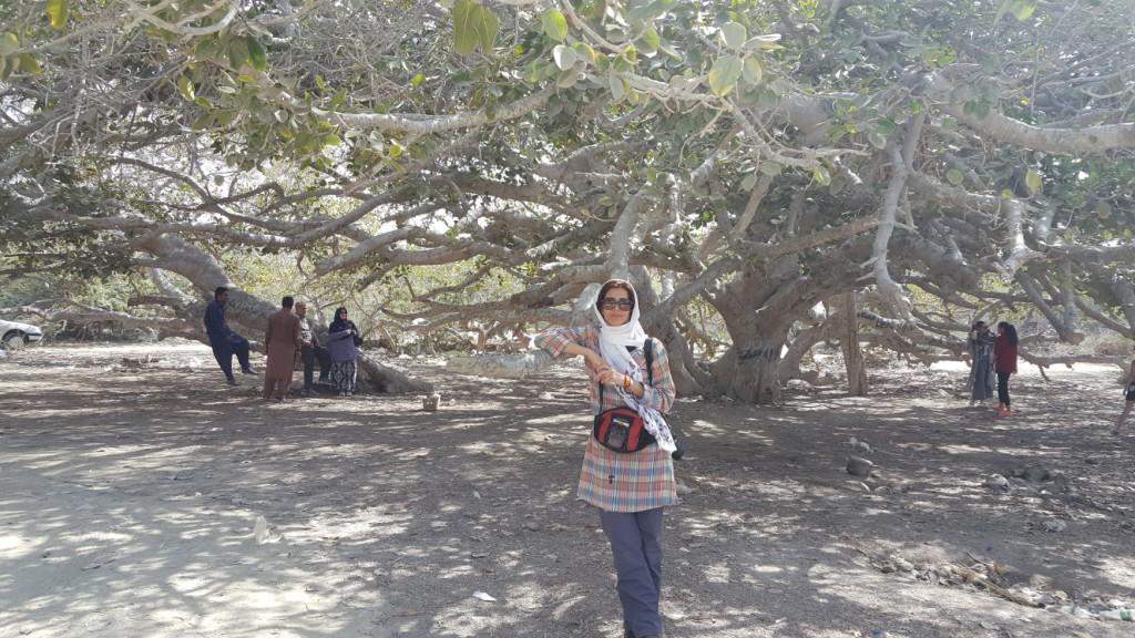 درخت انجیر معابد، (1397/01/04)