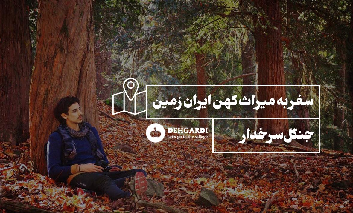 سفر به میراث کهن ایران زمین؛ جنگل سرخدار
