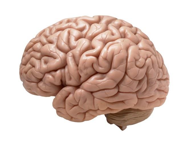 مغز ما برای خودش یه آرمان شهره