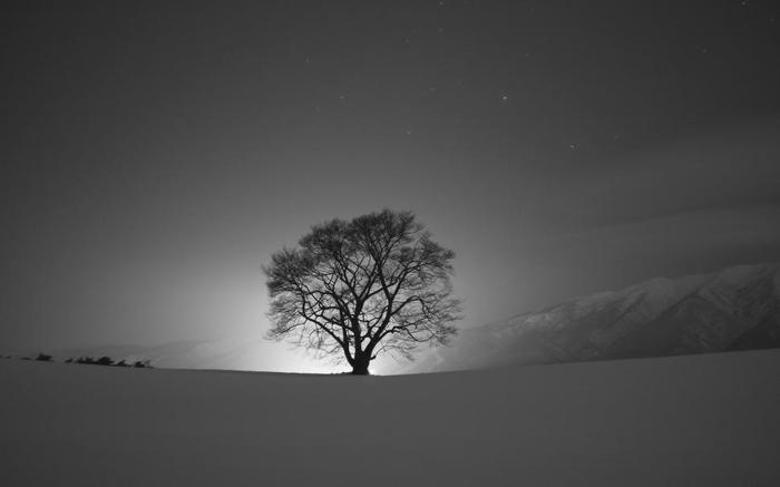 شعر دو بیتی تک درخت