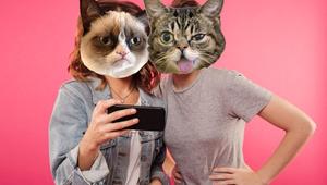 داستان گربه های معروف اینترنت ، بخش اول گربه اخمو و لیل باب