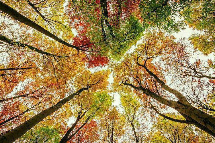 درباره قطعیت: و خداوند پاییز را آفرید...