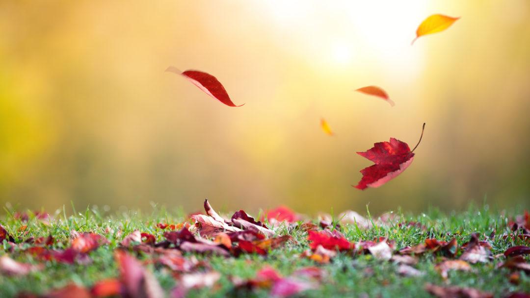 پاییز فصل هرس کردن است
