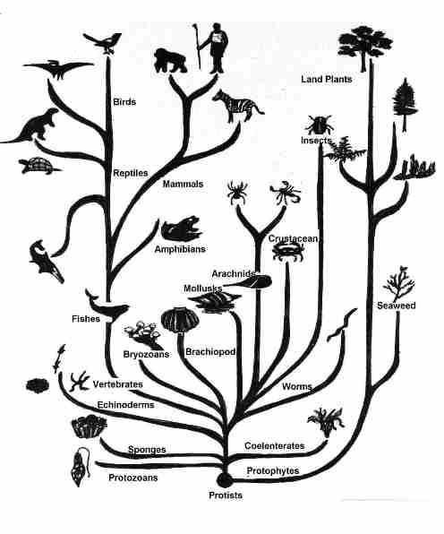 خرافه تکامل جانداران را باور نکنید(منطقه ممنوعه)