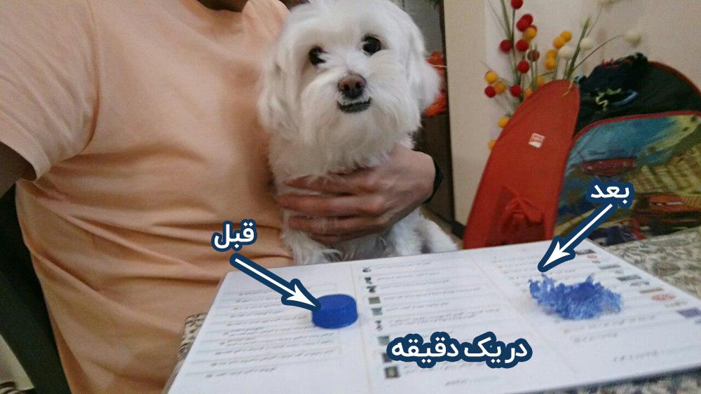 نگهداری سگ و 40 مورد که قبل از ورود سگ به زندیگتون باید بدونید