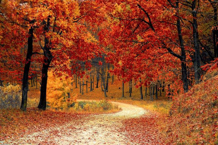 با این نکات سلامتی، پاییز سالمی را آغاز کنید