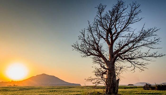 صبوری درخت و طاقتی که تمام شد