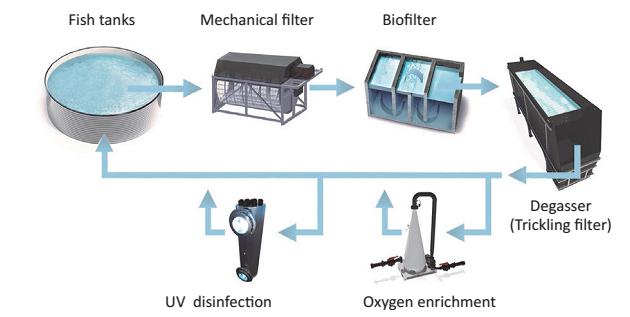 استفاده از اشعه فرابنفش (UV) در سیستم های تکثیر و پرورش ماهی مدار بسته
