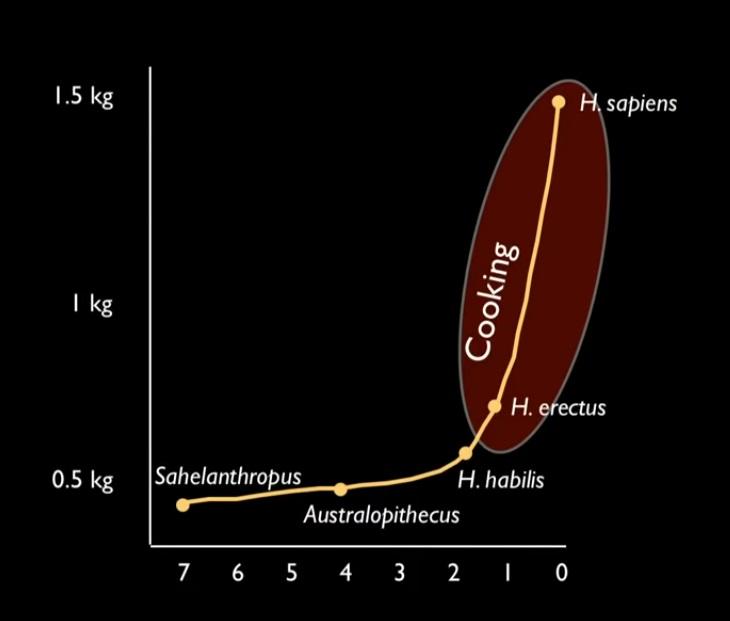 اندازه مغز گونه های مختلف انسانی