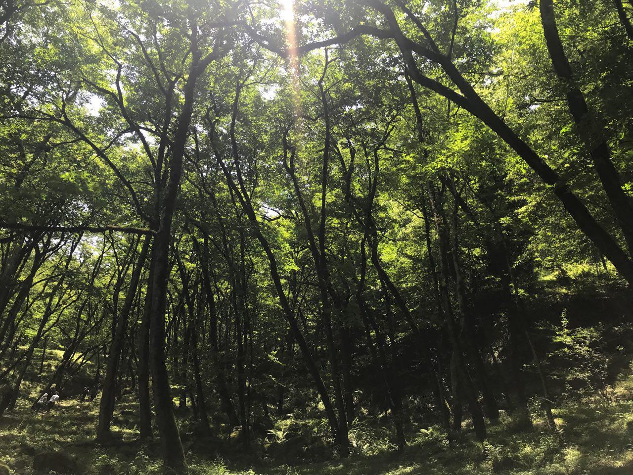 سفر به جنگل لفور؛ طراوت رو حس کن!