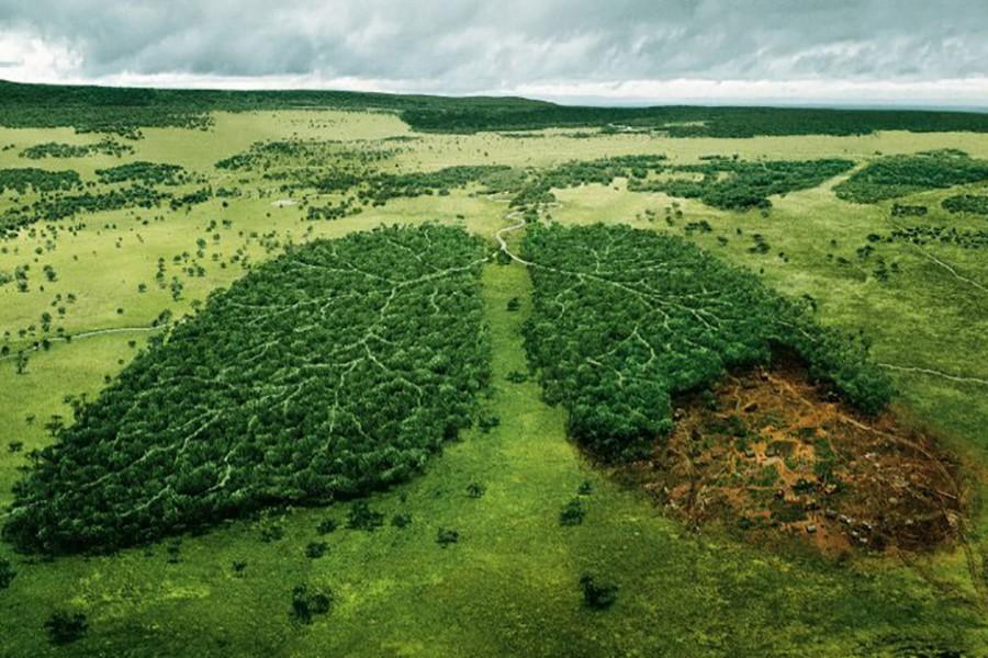 تخریب پوشش گیاهی در یک بومسازگان، همانند تخریب ریههای انسان