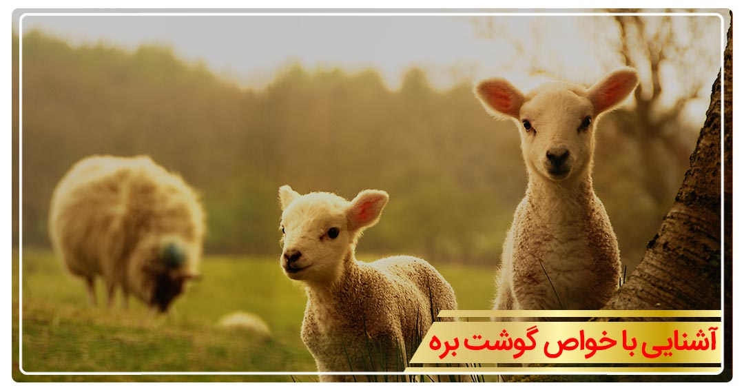 خواص گوشت گوسفند