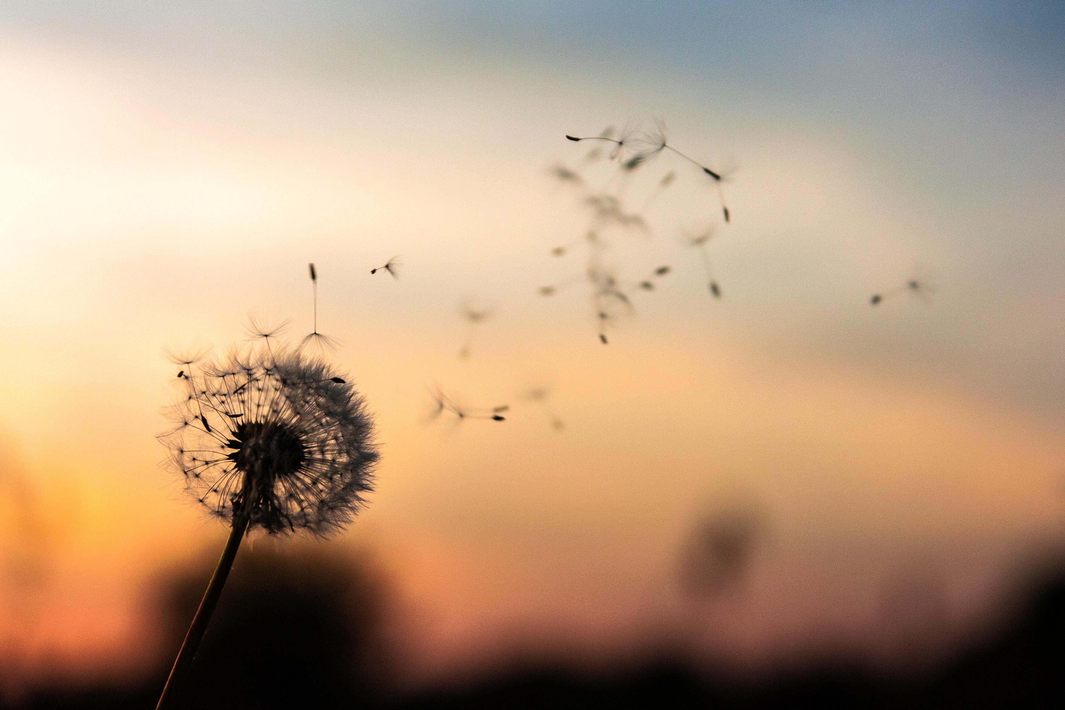 جهان و زندگی - نگاهی به فلسفه زندگی